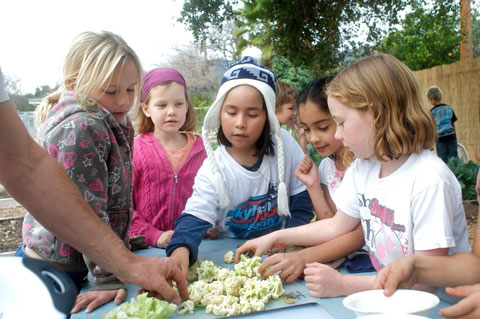 Students eating cauliflower from the garden.