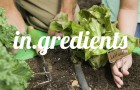 Goodlifer: in.gredients - a zero-Waste Food Store in Austin, Texas