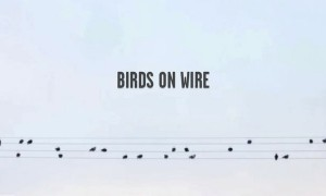 Goodlifer: Birds on Wire - Music Inspired by Nature